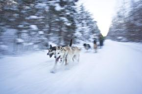 Bucket List Adventure: A day at Winterdance Dogsled Tours