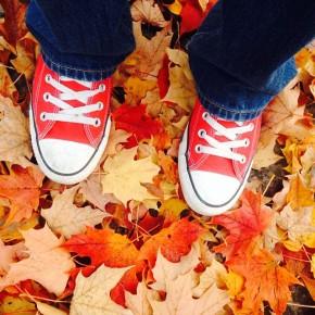 Ontario Fall Colours – As seen byyou!