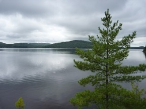 "Discovering ""The Jack Pine"" in Algonquin Provincial Park"