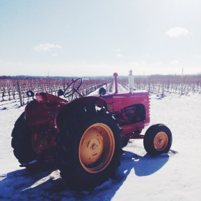 Five Frosty Scenes from the 2015 Icewine Festival